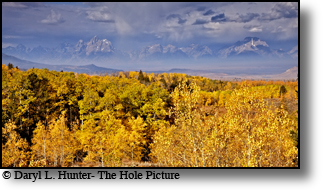 Fall colors, Grand Tetons, thunderstorm, golden aspen, Jackson Hole, Wyoming