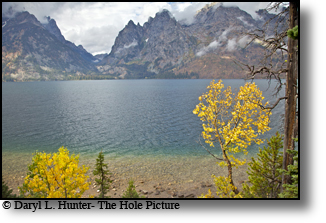 Autumn color, yellow cottonwood, Jenny Lake, Grand tetons, Grand Teton National Park